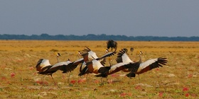 Camping Safari durch Kafue - und Liuwa Plains National Park